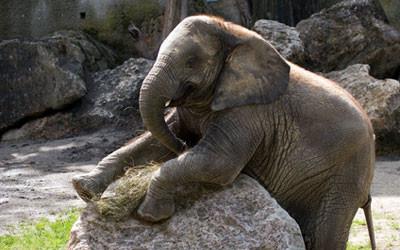 elefant tiergarten schönbrunn