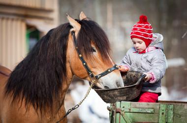 Bauernhof spielen – Das brauchen Sie dafür